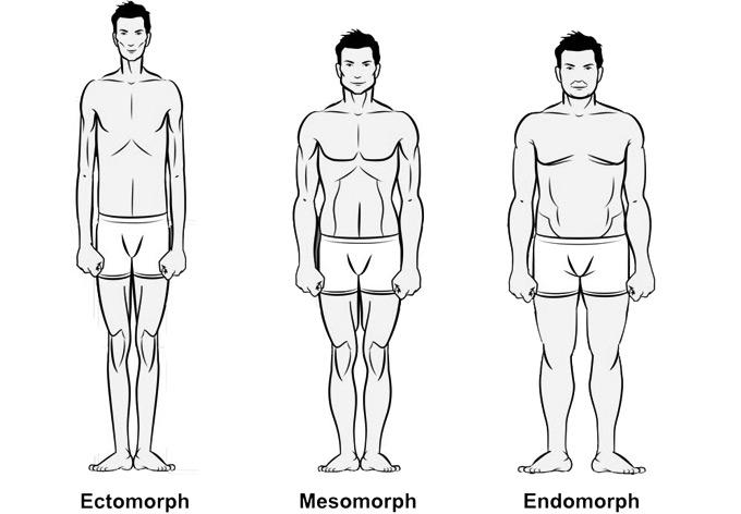 Men's Body Types | Ectomorph, Mesomorph, Endomorph - I Am